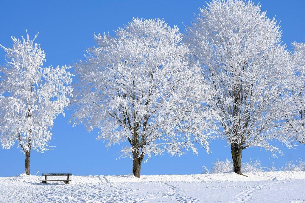 snow, trees, bench